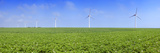 Field of Potatoes in Bloom with Wind Turbines  Thil-Manneville  Saint-Valery-En-Caux