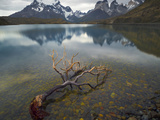 Dead Beech Tree in the Shallow Water  Torres Del Paine  Cordillera Paine  Lake Pehoe