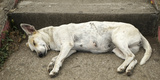 Dog Sleeping  Catarina  Masaya  Nicaragua