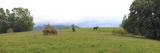 Horse in a Field  Bran  Brasov County  Transylvania  Romania