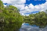 Reflection of Trees on Water  South Creek  Oscar Scherer State Park  Nokomis