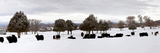 Herd of Yaks (Bos Grunniens) on Snow Covered Landscape, Taos County, New Mexico, Usa Papier Photo par Panoramic Images