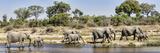 African Elephants (Loxodonta Africana) Along a River  Mala Mala Game Reserve  South Africa