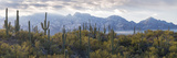Saguaro Cactus with Mountain Range in the Background, Santa Catalina Mountains Papier Photo par Panoramic Images