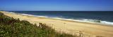 Grass on the Beach  Montauk Point  Montauk  Suffolk County  New York State  Usa