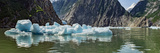 Icebergs Floating on Water of Tracy Arm Fjord  Southeast Alaska  Alaska  Usa