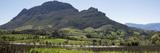 Elevated View of Vineyard  Delaire Graff Estate  Stellenbosch  Cape Town