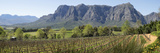 Elevated View of Vineyard with Franschhoek Mountain in Rear  Delaire Graff Estate