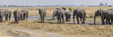 African Elephants (Loxodonta Africana) at a River  Kings Pool Camp  Linyanti  Okavango Delta