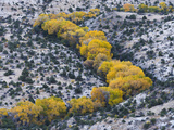 Autumn Cottonwoods at the Boulder Creek  Grand Staircase-Escalante National Monument  Utah  Usa