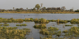 Hippopotamus (Hippopotamus Amphibius) in Water  Okavango Delta  Ngamiland  Botswana