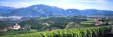 Elevated View of Houses and Vineyard  Missiano  Bolzano Province  Italy