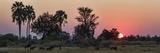 Herd of Bushbuck (Tragelaphus Scriptus) in a Forest at Dusk  Chitabe  Okavango Delta  Botswana