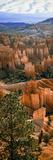 Hoodoos of Bryce Canyon in Bryce Canyon National Park  Utah  Usa