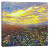 Cacti Sunrise