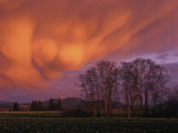 Mammatus Clouds in the Evening Light  Skagit Valley  Washington