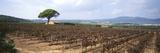 Vineyard  Sitges  Barcelona  Catalonia  Spain