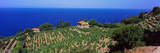 High Angle View of Vineyard  Chiessi  La Guardia  Island of Elba  Tuscany  Italy