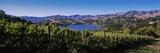Vineyard  Akaroa Harbour  Banks Peninsula  South Island  New Zealand