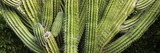 Close-Up of Cactus Plant  Cabo Pulmo  Baja California Sur  Mexico
