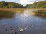 The Lake at Emo Court  Emo Village  County Laois  Ireland