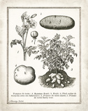 French Potatoes