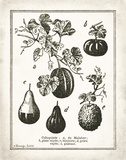 French Gourds