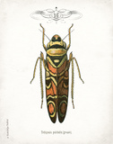 Beetle III