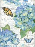 Garden Hydrangea II