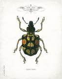 Beetle IV
