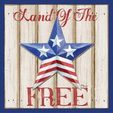 Patriotic Barn Star I