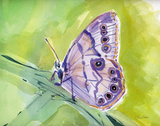 Watercolor Butterfly IV