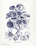 Indigo Botanical IV