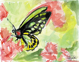 Watercolor Butterfly II