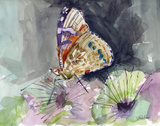 Watercolor Butterfly III