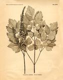 Vintage Botanical II