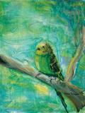 Parakeets II
