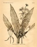 Vintage Botanical I