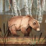 Sierra Bear