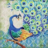 Patterned Peacock II
