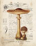 Mushroom I Reproduction d'art par Babbitt Gwendolyn