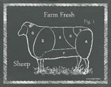 Sectioned Sheep