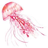 Pink Jellyfish Reproduction d'art par Sara Berrenson