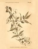 Vintage Botanical VIII
