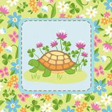 Meadow Turtle II