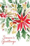 Poinsettia Pine