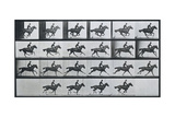 Bouquet  Galloping  Eadward Muybridge