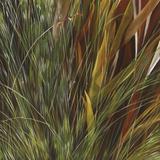 Flax and Fauna
