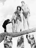 Johnny Weissmuller Escaping from Lions in a Movie Scene
