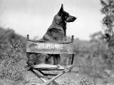 Rin Tin Tin Seated on Chair